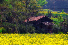 Rural landscape in wuyuan county Stock Image