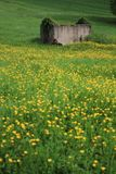 Rural landscape. With yellow flowers Stock Photo