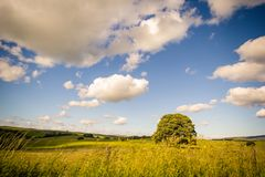 Rural landscape in Yorkshire Dales, England, UK. Rural landscape with a tree and beautiful sky in Yorkshire Dales, England, UK stock image
