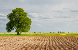 Rural landscapes are plowed field. Rural scenery plowed agricultural land with a lone tree in the distance and the beautiful backdrop of the sky Stock Photography
