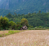 Rural Laos. Panoramic view of rice field and green hills Royalty Free Stock Image