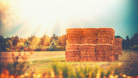 Rural late summer country landscape with wheat haystack or straw bales on field, agriculture farm Stock Images