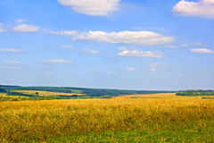 Rural late summer landscape Stock Image
