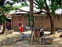 Rural life, Bangladesh stock image