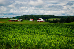 The Rural Life Royalty Free Stock Images