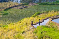 Rural life and farmland in Indonesia Stock Images