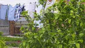 Rural life, in the foreground in a private garden growing Apple. In the background drying clothes royalty free stock photo
