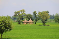 Rural life in India: wheat fields and small hay huts Royalty Free Stock Images