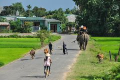 Rural life in Vietnamese countryside royalty free stock images