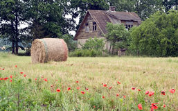 Rural lifestyle. The Latvian manor. The oblique hay.Rural lifestyle Royalty Free Stock Image