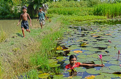 Rural Lifestyle. A girl collecting lotus from the pond at the Indian village Royalty Free Stock Image
