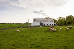 Rural Livestock Farm Stock Photography