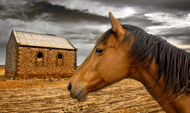 Rural  Living Stock Images