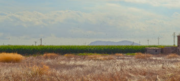 Rural Mallorca Stock Image