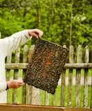 Rural man caring for bees. beekeeping. stock photos