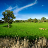 Rural Meadow Royalty Free Stock Photography
