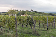 Rural mediterranean landscape with vineyards and village at sunset, Slovenia Royalty Free Stock Photos