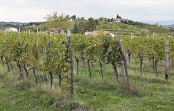Rural mediterranean landscape with vineyards and village at sunset, Slovenia Stock Image