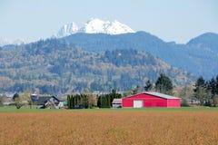 Rural Mountain Berry Farm Stock Photo
