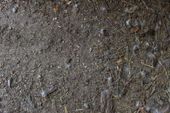 Rural mud texture Royalty Free Stock Image