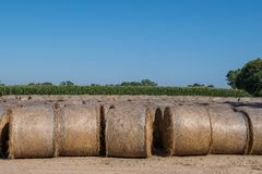 Straw bales drying on a sunny day. Beautiful background image. Royalty Free Stock Photography