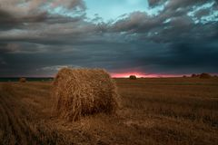 Sunset in the field after harvest. Rural nature on the farm. Straw in the meadow. Yellow yellow wheat crop in summer. The natural landscape of the countryside Stock Image