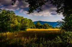Rural Nature Landscape Stock Images