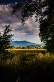 Rural Nature Landscape Stock Image