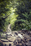 Rural nature Path in wild forest Royalty Free Stock Image
