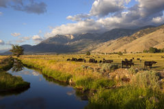 Rural Nevada. Carson Valley, Nevada, early summer. Eastern Sierra Nevada in the background Royalty Free Stock Photography