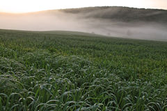 Rural New York Farm. Landscape of a rural New York farm in the early morning mist with dew on the long grass Royalty Free Stock Images