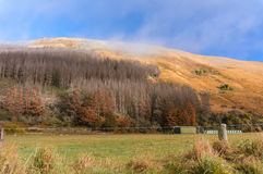 Rural New Zealand in autumn near Moke lake Stock Photography