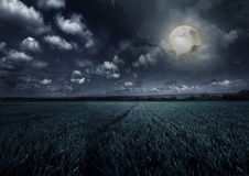 Rural night with moon. Young wheat field at night with the moonlight Royalty Free Stock Photography
