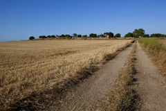 Rural Non-urban Road Throw The Field