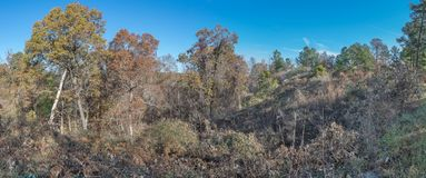 Rural North Mississippi Panoramic Landscape. A rural panoramic image captured while driving on a remote Mississippi logging road stock images