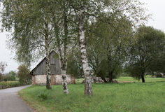Rural old village road. An old and rural village road with birch trees Stock Images