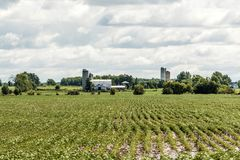 Rural Ontario Farm with Barn Silo storage agriculture animals Canada farming Stock Images
