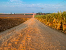 Rural orange dirt road with blue sky in sugar cane plantation stock images