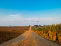 Rural orange dirt road with blue sky in sugar cane plantation royalty free stock photography
