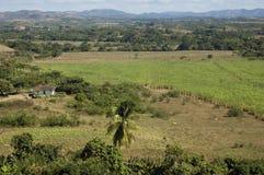 Rural panorama near Trinidad, Cuba. Rural view near Trinidad : sugar cane field and small house Royalty Free Stock Images