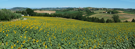 Rural panorama of Penango. Piemonte Royalty Free Stock Photos