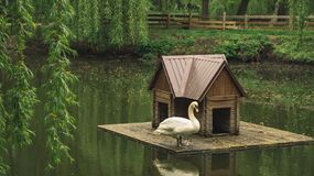 Free Rural Park Outdoor Moody Rainy Scenic View With Wooden Cabin For Aquatic Animals And Lonely Swan, Solitude Nature Concept Royalty Free Stock Image - 184325616