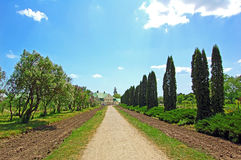 Rural park road Royalty Free Stock Image