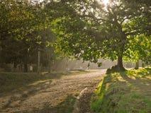 Rural park in Vigo stock images
