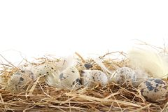 Rural pastel quail easter eggs in the hay with feathers Stock Images