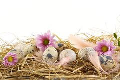 Rural pastel quail easter eggs in the hay with feathers Stock Photography