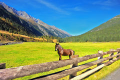 Rural pastoral Royalty Free Stock Images