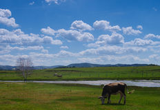 Rural pasture Royalty Free Stock Photo
