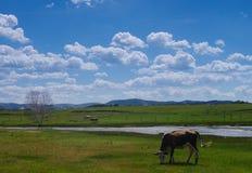 Rural pasture Royalty Free Stock Photo