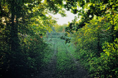 Rural Path Stock Images